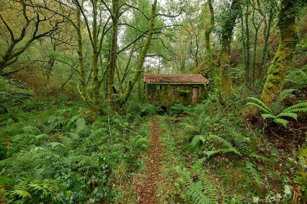 Wąska ścieżka pełna czerwonych liści, która prowadzi do opuszczonego wiejskiego domu w lesie na terenie galicji w hiszpanii.