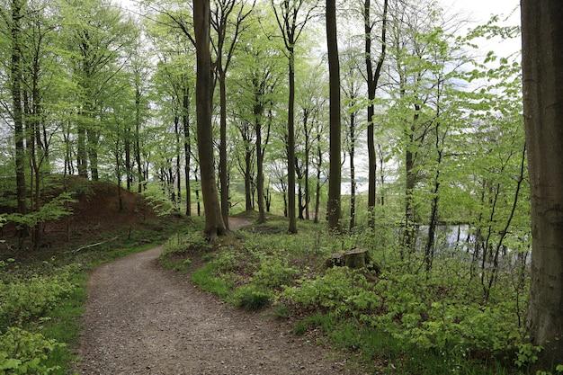 Wąska ścieżka w lesie otoczonym pięknymi drzewami w lesie w hindsgavl, middelfart