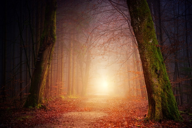 Wąska ścieżka w pobliżu drzew