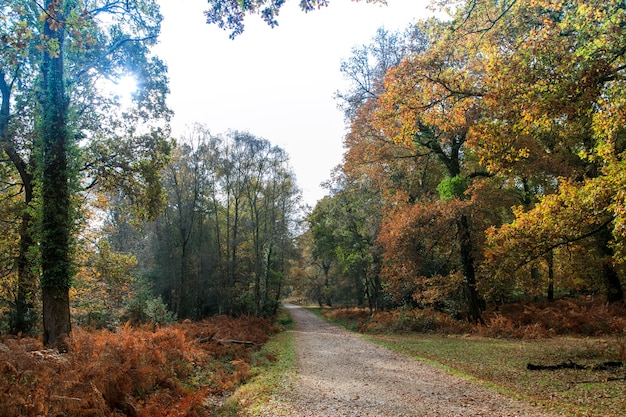Wąska ścieżka w pobliżu wielu drzew w new forest niedaleko brockenhurst w wielkiej brytanii