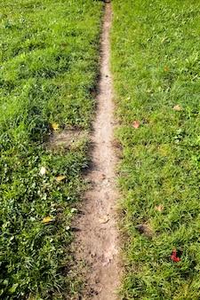 Wąska ścieżka wydeptana w polu zielonych roślin