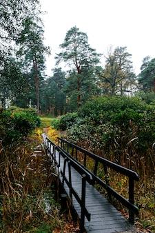 Wąski drewniany most prowadzący do wiecznie zielonego lasu iglastego