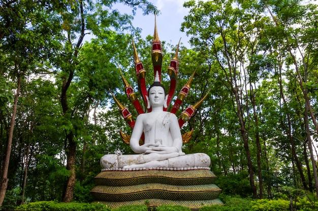 Wat analayo thipphayaram lub świątynia analayo znajduje się w doi busarakam w prowincji phayao w tajlandii