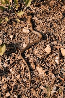 Wąż czołgający się po ziemi w słoneczny dzień