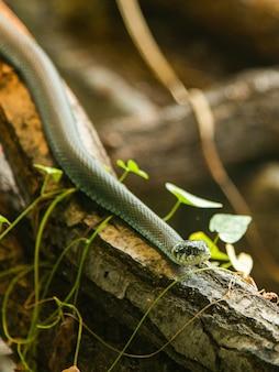 Wąż w terrarium