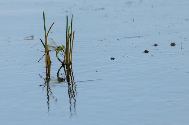 Ważki i żaby w stawie.