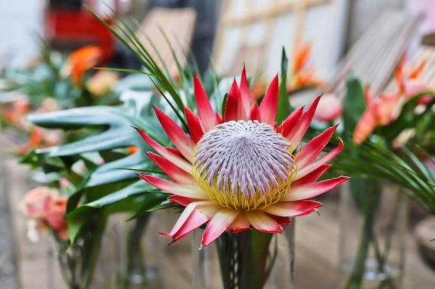 Wazony z egzotycznymi kwiatami: strelitzia, protea, anturium i monstera