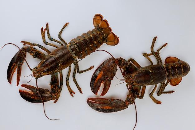 Wciąż żywi homary odizolowywający na biel powierzchni