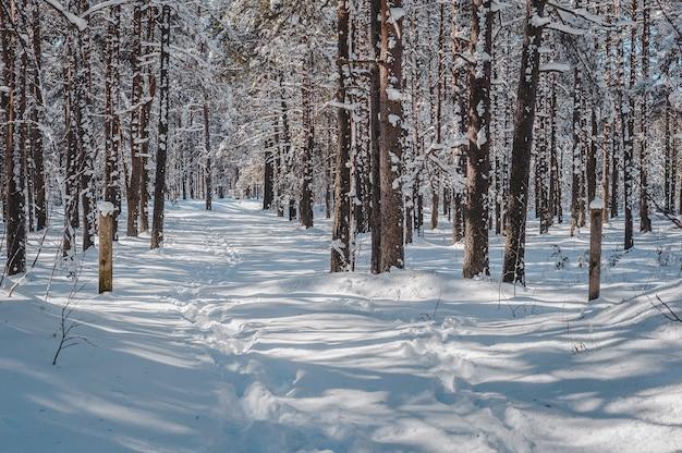Wczesną wiosną krajobraz ze ścieżką w sosnowym lesie.