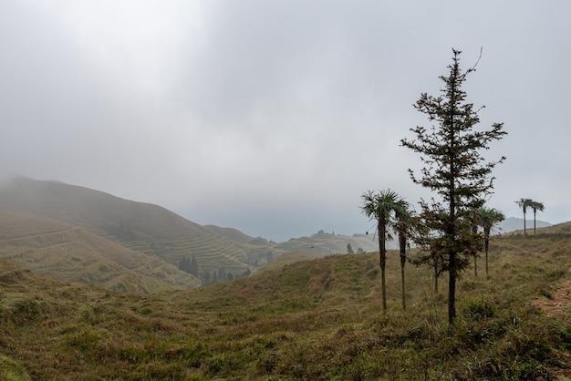 Wcześnie rano drzewa w trawiastej mgle