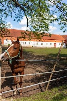 We wsi dziedziniec dla koni. rudy koń w stajni z jeźdźcem, zbliżenie