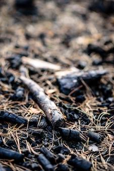 Węgle z pożaru w lesie.