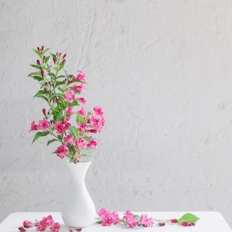 Weigela kwitnie w białej wazie na białym tle