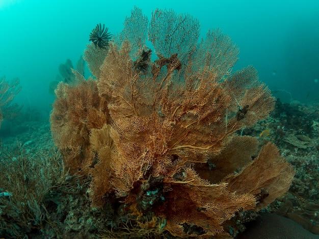 Wentylator morski w oceanie