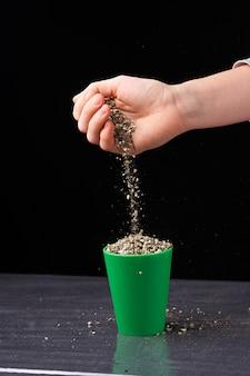 Wermikulit w rękach mężczyzny. ścieśniać. konopie rosnące w glebie.