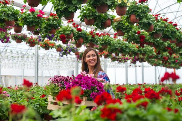 Wesoła kobieta kwiaciarnia niosąca skrzynię z kwiatami w szklarni ogrodowej szkółki roślin
