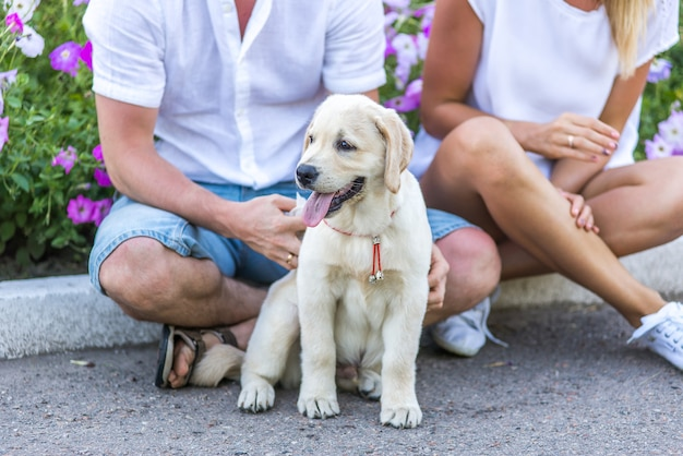 Wesoła para bawi się z psem w parku. letni spacer na świeżym powietrzu z szczeniakiem retrievera. facet i dziewczyna bardzo lubią swojego szczeniaka labradora.