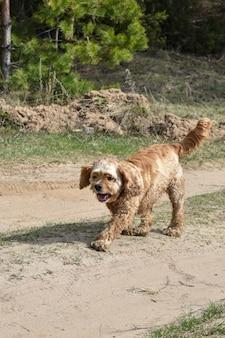 Wesoły pies spaceruje po leśnej polanie
