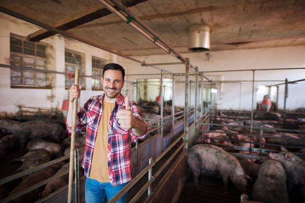 Wesoły rolnik z widłami stoi w zagrodzie dla świń i opiekuje się trzody chlewnej