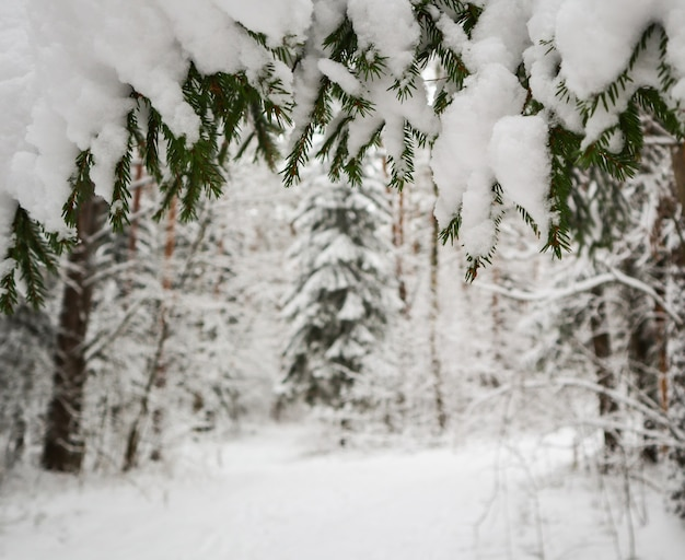Wesołych świąt i szczęśliwego nowego roku pozdrowienie tło. zimowy krajobraz ze śniegiem i choinkami.