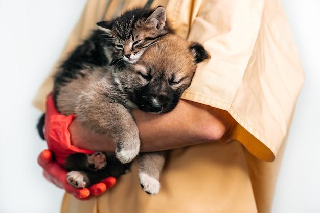 Weterynarz bada psa i kota. szczeniak i kotek u lekarza weterynarii. szczepienia zwierząt domowych.