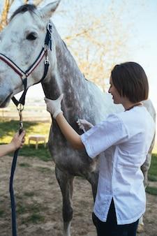 Weterynarz dający zastrzyk koniowi.