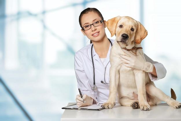 Weterynarz korzystający z technologii z małym psem - na białym tle na białym tle