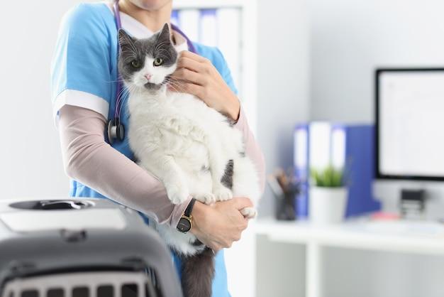 Weterynarz trzyma kota w swoim biurze