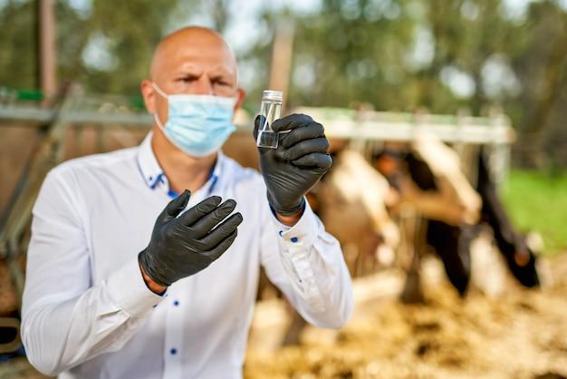 Weterynarz u krów zwierząt gospodarskich wykonuje analizy.