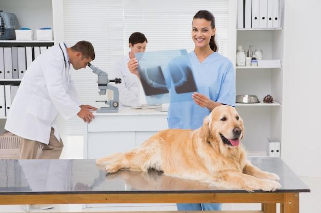 Weterynarza coworker egzamininuje psa promieniowanie rentgenowskie