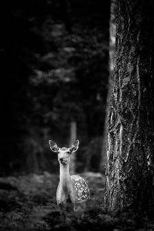 Whitetail deer buck stojący w rosyjskim lesie.