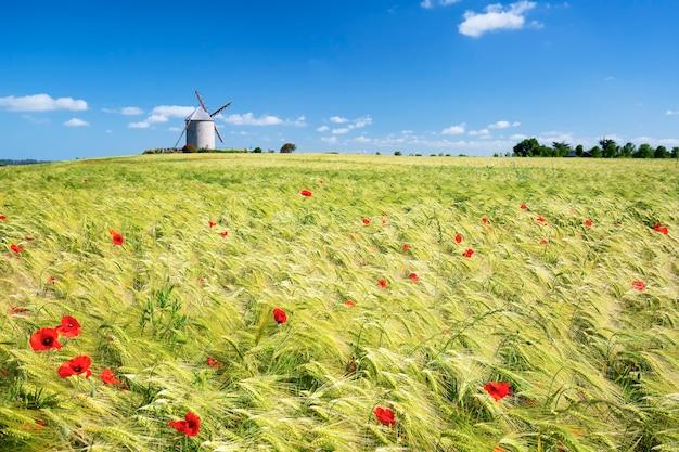 Wiatrak i pole pszenicy, francja, europa.