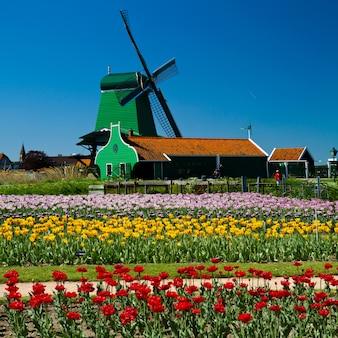 Wiatrak w holandii