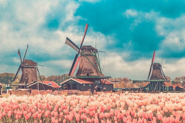 Wiatraki zaanse schans, spokojna wioska w holandii, prowincja holandia północna.