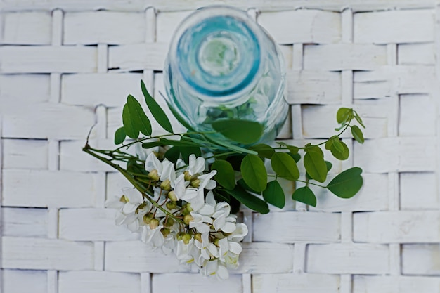 Wiązka białych kwiatów akacja blisko butelki medycyny. zbiór ziół w sezonie. gałęzie szarańczy czarnej, robinia pseudoacacia, fałszywa akacja. leki z roślin leczniczych.