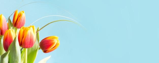 Wiązka czerwoni i żółci tulipanowi kwiaty na uderzającym błękitnym tle.