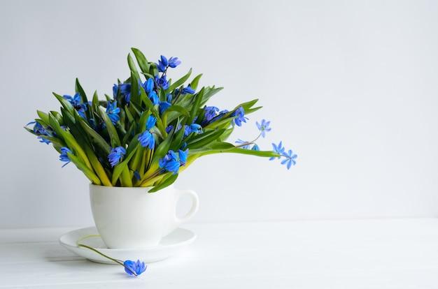 Wiązka delikatnego squill (cebulica, galanthus) błękitni kwiaty w herbacianej filiżance z wodą na bielu