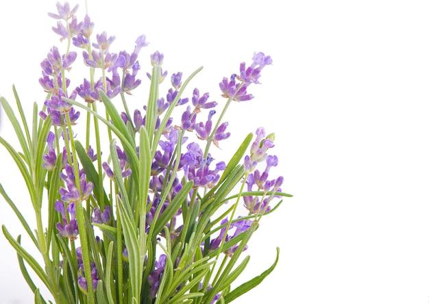 Wiązka kwiatów lawendy na białej powierzchni.