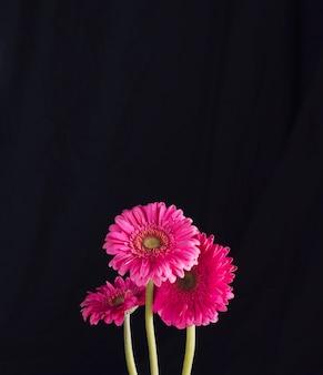 Wiązka piękni świezi jaskrawi różowi kwiaty