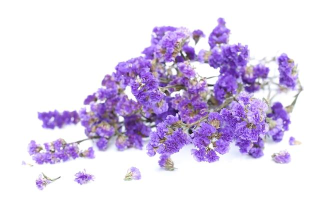 Wiązka purpurowi kwiaty na białym tle