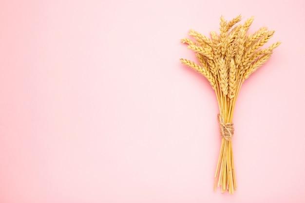 Wiązka spikelets pszenicy na różowym tle