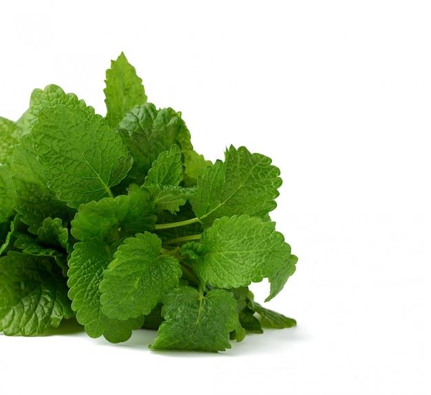 Wiązka świeżej zielonej mięty, aromatyczna przyprawa do potraw i kurek