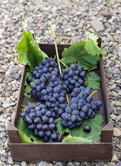 Wiązki błękitni winogrona w drewnianym pudełku w ogródzie