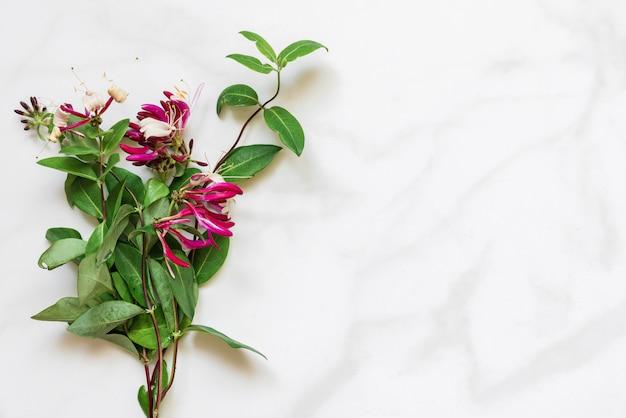 Wiciokrzew bukiet kwiatów na białym marmurowym stole z miejsca kopiowania. widok z góry. makieta