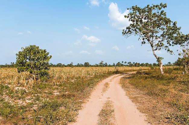 Widok afrykańskiej przyrody z drogą i drzewami