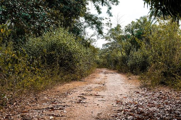 Widok afrykańskiej przyrody z drogą i roślinnością