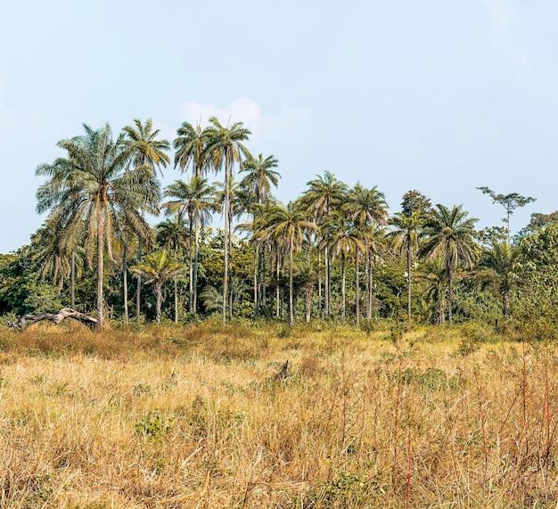 Widok afrykańskiej przyrody z drzewami i roślinnością