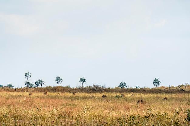 Widok afrykańskiej przyrody z drzewami