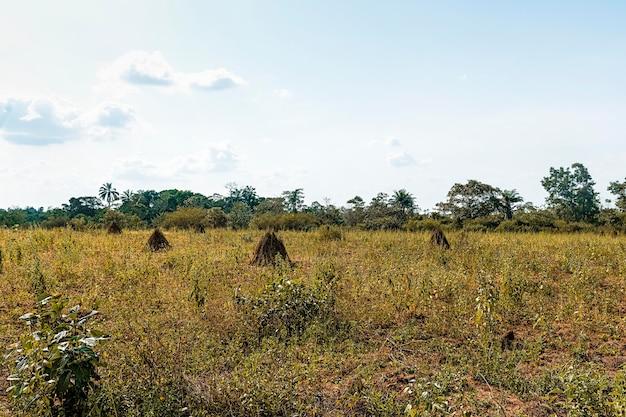 Widok afrykańskiej przyrody z roślinnością i drzewami