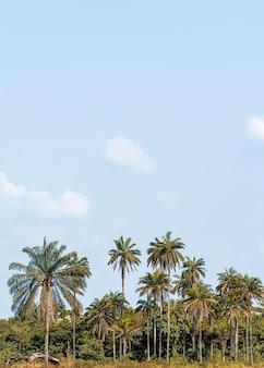 Widok afrykańskiej scenerii przyrody z roślinnością i przestrzenią do kopiowania